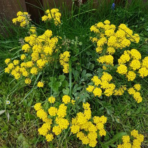Beautiful Flowering Shrubs  - Free pictures