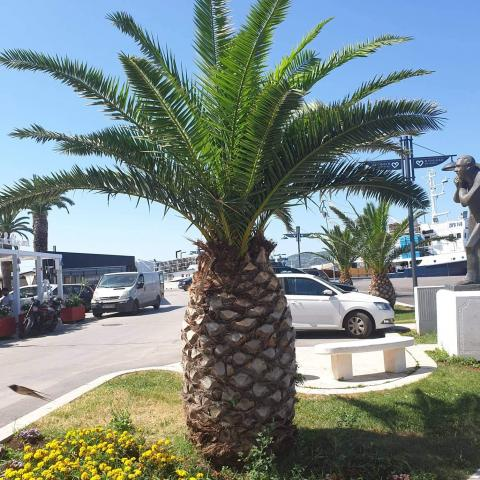 Beautiful Tropical exotic Palm trees - Free Download