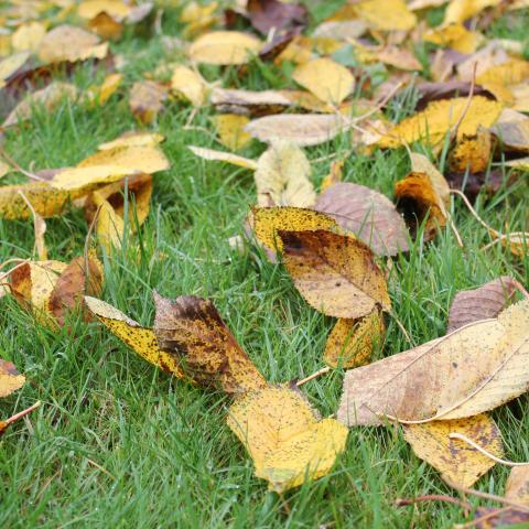 Why Do Leaves Fall in Autumn?
