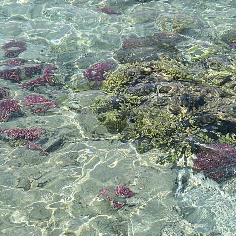 Sharm El Sheikh Egypt  - Crystal clear sea water