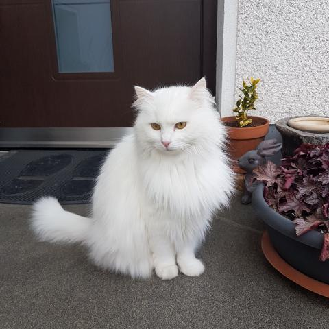 The Wonder of White Cats - Free photos