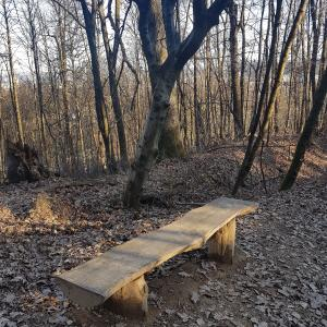 A simple Bench seat by footpath in the woods