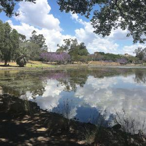 Beautiful artificial lake