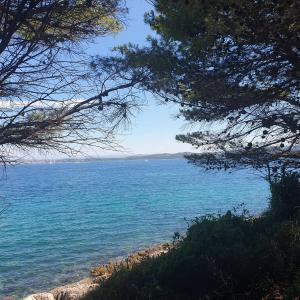 Beach and Pine trees