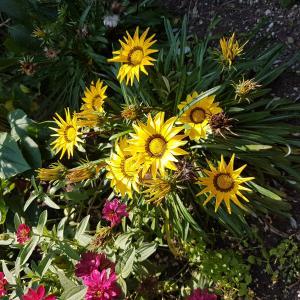 Paint Your Garden Yellow